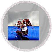 Consider The Ants 2 Of 3 Round Beach Towel