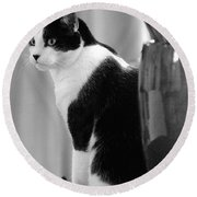 Contemplative Cat Black And White Round Beach Towel