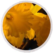 Contemporary Flower Artwork 10 Daffodil Flowers Evening Glow Round Beach Towel