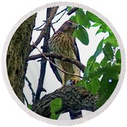 Cooper Hawk Round Beach Towel