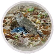 Cooper's Hawk - Accipiter Cooperii - With Blue Jay Round Beach Towel