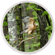 Coopers Hawk In New Hampshire Round Beach Towel