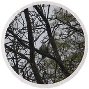 Cooper's Hawk Perched In Tree Round Beach Towel