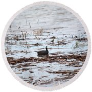 Coot In The Weeds Round Beach Towel