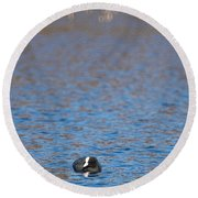 Coot Round Beach Towel