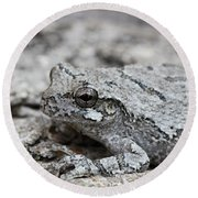 Cope's Gray Tree Frog #5 Round Beach Towel