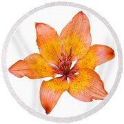 Coral Colored Lily Isolated On White Round Beach Towel