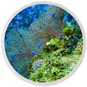 Coral In Truk Round Beach Towel