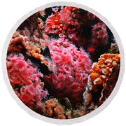Coral Polyps Round Beach Towel