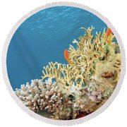 Coral Reef Eco System Round Beach Towel