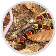 Coral Snake Snack Round Beach Towel