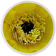 Core Of A Yellow Cactus Flower At Pilgrim Place In Claremont-california Round Beach Towel