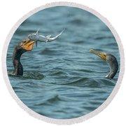 Cormorant Fish Fight Round Beach Towel
