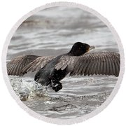 Cormorant Taking To The Air Round Beach Towel