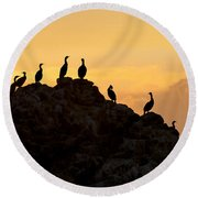 Cormorants On A Rock With Golden Sunset Sky Round Beach Towel
