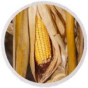 Corn Cobb On Stalk Round Beach Towel