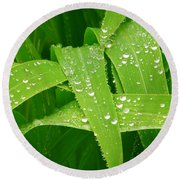 Corn Leaves After The Rain Round Beach Towel