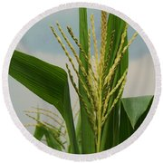 Corn Stalk Round Beach Towel