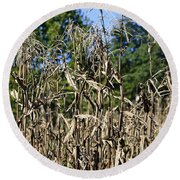 Corn Stalks Drying Round Beach Towel