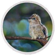 Costa's Hummingbird - Square Round Beach Towel