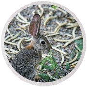 Cottontail Rabbit 4320-080917-1 Round Beach Towel