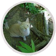 Cougar In The Woods Round Beach Towel