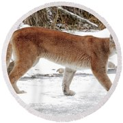 Cougar On The Prowl Round Beach Towel