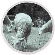 Counting Sheep Round Beach Towel