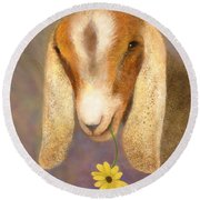 Country Charms Nubian Goat With Daisy Round Beach Towel