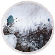 Couple Chilly Bluebirds Round Beach Towel