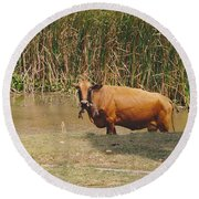 Cow In The Field Round Beach Towel