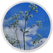 Cow Parsley Blossoms Round Beach Towel