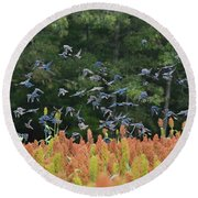 Cowbirds In Flight Over Milo Fields In Shiloh National Military Park Round Beach Towel
