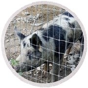 Cowpig On The Farm Round Beach Towel