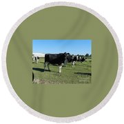 Cows In A Row Round Beach Towel