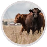 Cows In The Fall Pasture Round Beach Towel