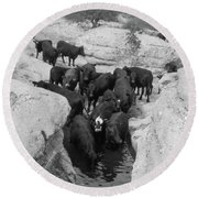 Cows In The Hole Round Beach Towel