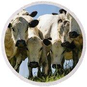 Cows Round Beach Towel