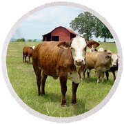 Cows8944 Round Beach Towel