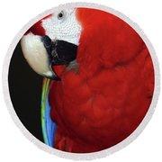 Coy Scarlet Macaw Round Beach Towel