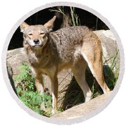 Coyote Grin Round Beach Towel