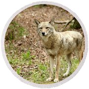 Coyote In Cades Cove Round Beach Towel