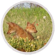 Coyote Pups Round Beach Towel