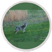 Coyote Stance  Round Beach Towel