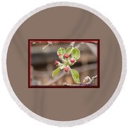 Crab Apple Buds Round Beach Towel