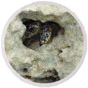 Crab Hiding In A Rock On The Seashore Round Beach Towel