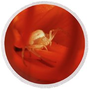 Crab Spider Round Beach Towel