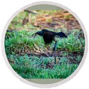 Grackle In The Morning  Round Beach Towel