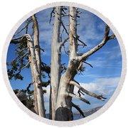 Crater Lake Tree Round Beach Towel