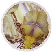 Cream And Purple Iris Round Beach Towel